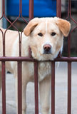 Peeking Dog Royalty Free Stock Photos