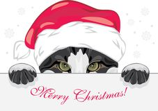 Peeking funny cat in a Christmas cap Royalty Free Stock Photos