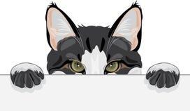 Peeking funny cat. Young peeking funny cat. Illustration Royalty Free Stock Photo