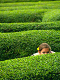 Peeking girl with a flower in her hair. A girl with a flower in her hair, hiding in a maze Royalty Free Stock Image