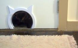 Peeking through her brand new cat door. Coming Through the Cat Door. Misty, a furry black cat, peeks through her new cat door on her way back from the litter box stock images