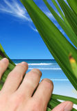 Peeking into Paradise Stock Photography