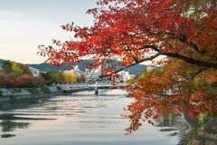 Peeking through a red tree in autumn at the Atomic Bomb Dome in Hiroshima, Japan. stock photos