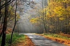 Peeking sunrays в лесе утра Стоковые Изображения