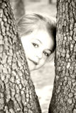 Peeking Between the Trees Royalty Free Stock Photography