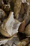Peel av amerikanska jordnötter royaltyfri fotografi