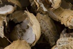 Peel av amerikanska jordnötter royaltyfri foto