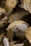 Peel av amerikanska jordnötter arkivbilder