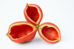 Peel  Chestnuts Stock Photos