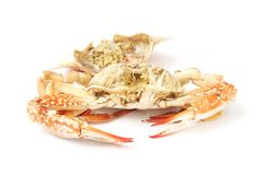 Peel steamed blue crab Stock Photos