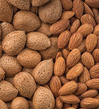 Peeled almonds close up, top view Royalty Free Stock Photos