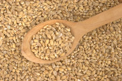 Peeled barley Stock Photography