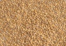 Peeled barley background Royalty Free Stock Images