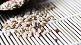 Peeled barley with a wooden spoon royalty free stock image