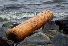 Peeled cedar drift log Royalty Free Stock Photography