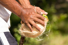 Peeled coconuts Royalty Free Stock Photos