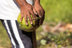 Peeled coconuts Stock Image
