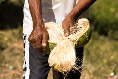 Peeled coconuts Stock Photography