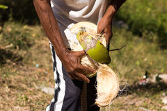 Peeled coconuts Royalty Free Stock Images