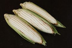 Peeled corn, elote maiz mexican food in mexico stock image