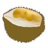 Peeled durian Royalty Free Stock Photos