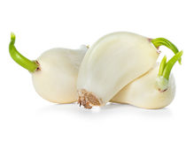 Peeled garlic close-up isolated on a white. Background Stock Photo