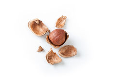 Peeled hazelnut,  on white Royalty Free Stock Images