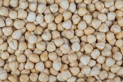 Peeled hazelnuts Royalty Free Stock Images