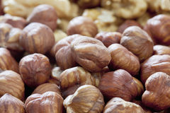 Peeled hazelnuts, close up Royalty Free Stock Images