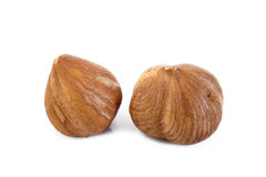 Peeled hazelnuts Stock Images
