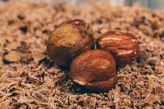 Peeled hazelnuts  macro shot. Macro shot of peeled hazelnuts lying in chocolate chips Stock Photo