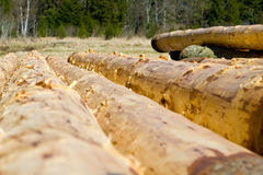 Peeled logs Stock Photography