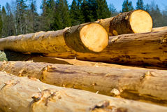Peeled Logs Stock Images
