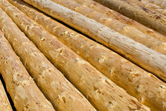 Peeled logs Royalty Free Stock Image