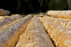 Peeled logs drying Royalty Free Stock Photos