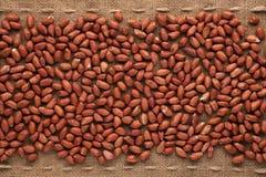 Peeled peanut Royalty Free Stock Photo