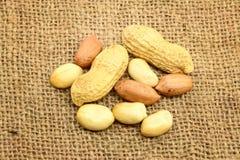 Peeled Peanuts Royalty Free Stock Photo