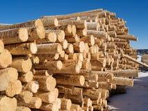 Peeled pine logs Stock Photography