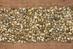 Peeled pumpkin seeds  lying on sackcloth between the lines Stock Photos