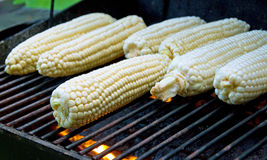 Peeled raw corns on the grill Royalty Free Stock Photography