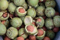 Peeled ripe raw walnut. Peeled ripe raw green walnut Royalty Free Stock Photos