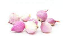 Peeled shallots Stock Image