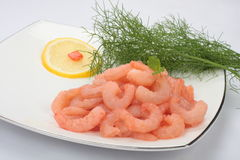 Peeled  shrimp. Peeled shrimp on white plate Royalty Free Stock Photo