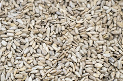 Peeled sunflower seeds, backgrounds and textures Royalty Free Stock Photo