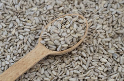 Peeled sunflower seeds, backgrounds and textures Stock Photos