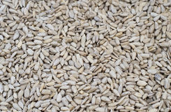 Peeled sunflower seeds, backgrounds and textures Stock Images