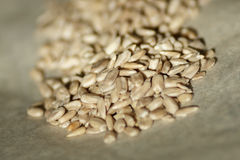Peeled sunflower seeds Stock Images