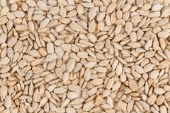 Peeled sunflower seeds close up. Royalty Free Stock Photo