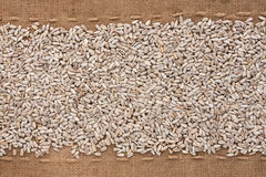 Peeled sunflower seeds lying on sackcloth between the lines Royalty Free Stock Images