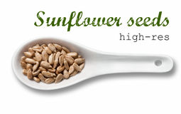 Peeled sunflower seeds in white porcelain spoon Royalty Free Stock Images